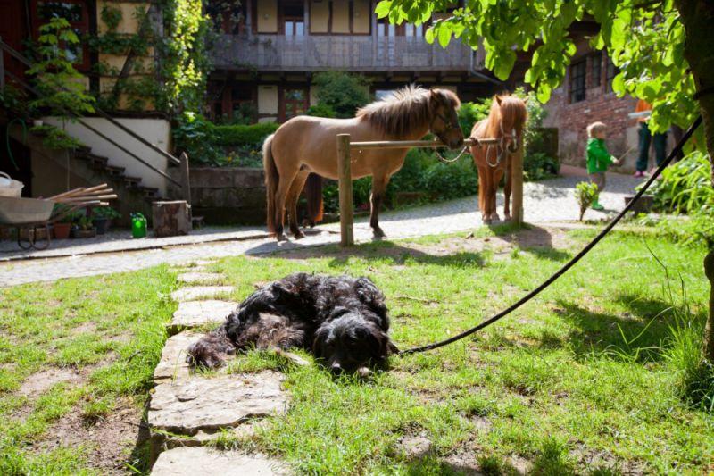 Pension zum Pferdebrunnen