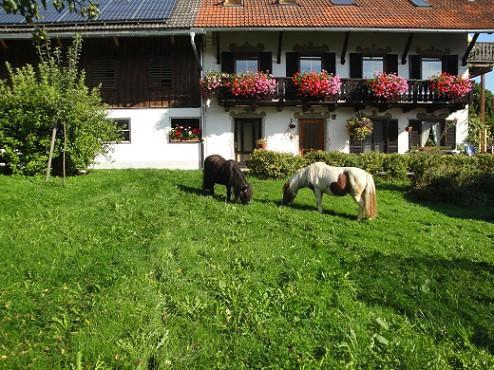 Peitingerhof
