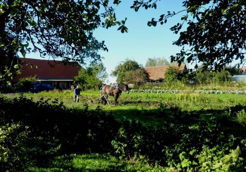 """""""Opa's Bauernhof"""""""