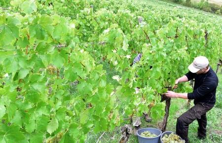 Ökologischer Land- und Weinbau Kraemer
